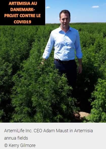L'Artemisia dans les champs et labos occidentaux est « puissant » et dans les champs et labos africains est « controversé » et « déconseillé ». Et certains Afros disent Amen!